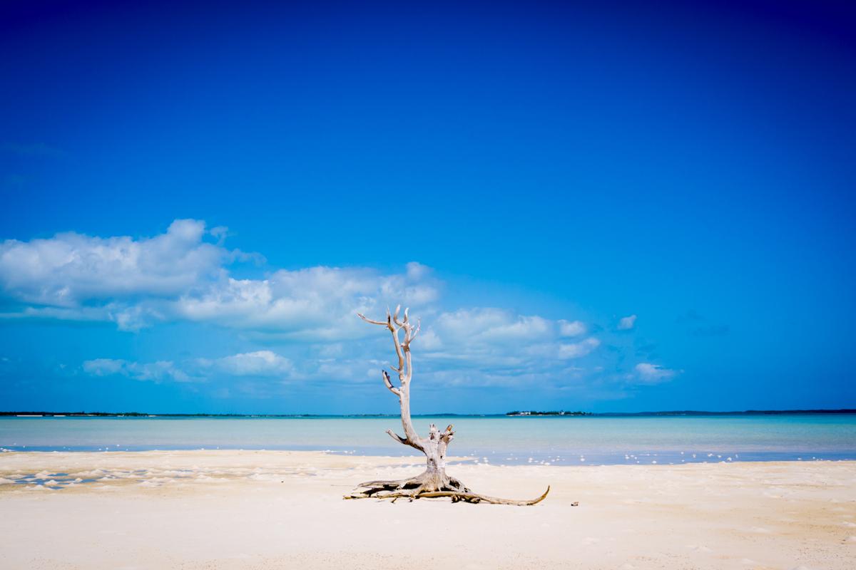 Lone Tree Harbour Island, The Bahamas.